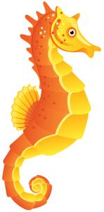 BFUTS Seahorse